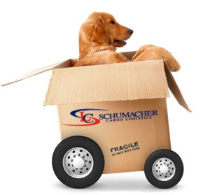 Moving your pet interstate in Australia